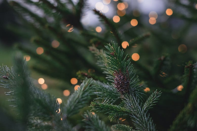 5 Ways To Go Green For The Holidays