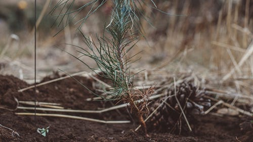 image of newly planted tree