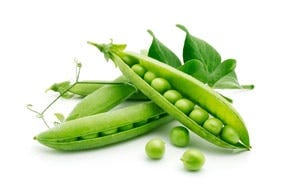 image of pea peptides